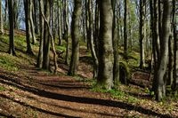 Forest hiking trail on the rampart to the Celtic oppidum Houbirg, Happurg, Hersbrucker Schweiz,