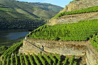 Terrassenförmige Weinberge mit Trockenmauern, Höllen-Tal Weinberg, Pinhao, Portugal
