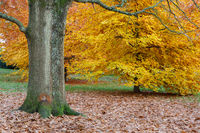Autumn Color in Grove Park, Harborne, Birmingham