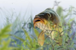 Fische 15