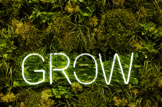 Grow Text in grüner Hecke