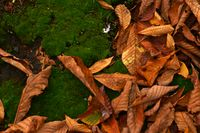 Autumn leaves on the moss bed