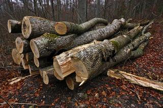 Holzpolter, Eschenholz,