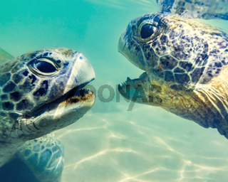 Turtles at Hikkaduwa beach