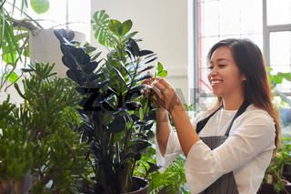 Junge Floristin kontrolliert Qualität von Grünpflanze