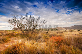 Tree near sand dunes in the desert, Spain, Andalusia, Almeria