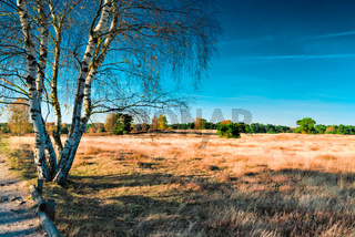HALTERN, GERMANY - OCTOBER 31, 2016: Westruper Heide - Scenic heather landscape with deep blue sky and solitaire trees