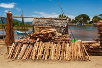 firewood on street marketplace, Maroantsetra Madagascar