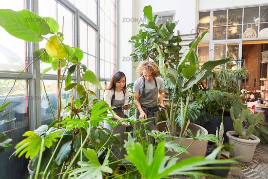 Floristen oder Gärtner Team im Gewächshaus