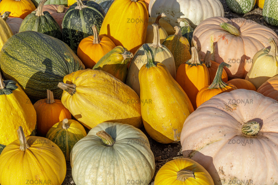 Autumn Color Pumpkin Mix in Farmers Market.