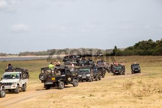 Jeeps in Kaudulla National Park, Sri Lanka