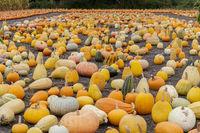Pumpkin Maze in Farmer's Market.