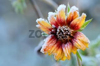 Blumen 750