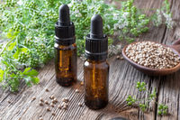 Bottles of coriander essential oil with cilantro plant