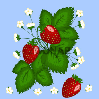 Figure, illustration. Bush strawberries with three red berries and white flowers.