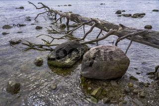 Am Ufer des Ruegischen Boddens