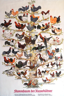 Stammbaum der Rassehühner