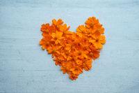 Heart shape orange cosmos flowers