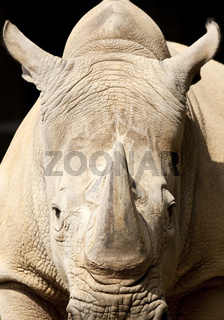 DO_Zoo_Nashorn_01.tif