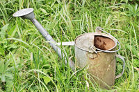 Empty metal watering can
