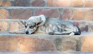 Sleepy street dog