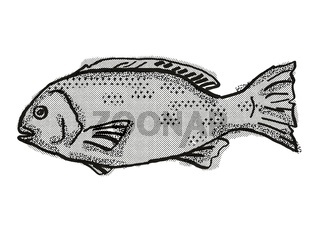 Western Rock Blackfish Australian Fish Cartoon Retro Drawing