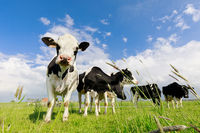 few cows on green grass pasture