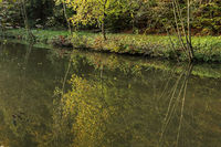 Fish pond in autumn