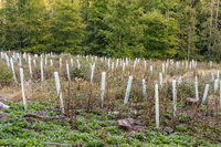 Afforestation in the forest