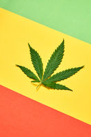 Fresh green cannabis leaf on a tricolor diagonal paper background.
