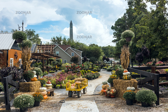 Pembroke, Kentucky - September 7, 2018: Amish and Mennonite organized the Pumpkins market for Thanksgiving day and Halloween
