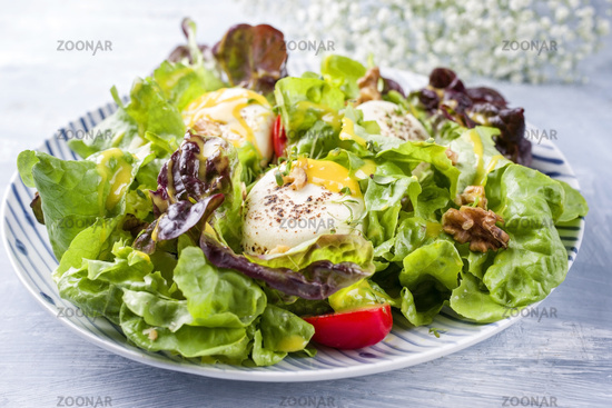 Traditional Germen summer lettuce with curled lettuce