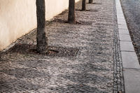 stone pavement with trees