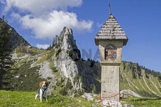 Beagle in den Tegernseer Alpen