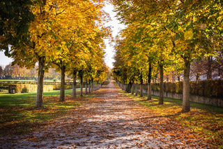 Park Pathway Trail Autumn Fall Stone Dirt Walking Long Perspective Dead Leaves on Ground Daytime Warm Beautiful Light Diagonal Lines Distance