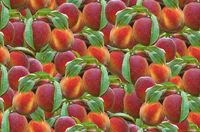 Peach Seamless Pattern