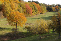 Odenwald landscape in autumn