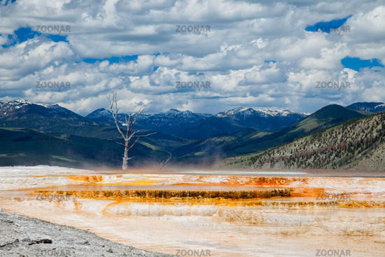 Mammoth hot springs in Yellowstone National Park