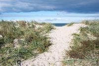 Path to beach in Denmark