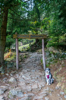 Dog waiting at hiking path Meeraner Hoehenweg crossing the forest near the Leiter Alm in Italy