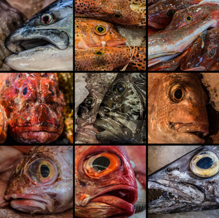 Collage of Fish sold in Auckland Fish Market