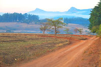 in swaziland   wildlife  nature  reserve