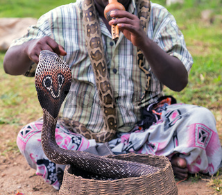 Snake fakir playing King cobra