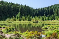Lagoa das Empadadas in Forest, Sao Miguel, Azores, Portugal