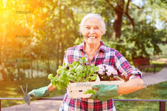 Glückliche Seniorin im Sommer bei Gartenarbeit