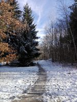 Narrow path in forest