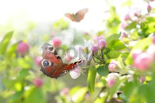 Schmetterling 227