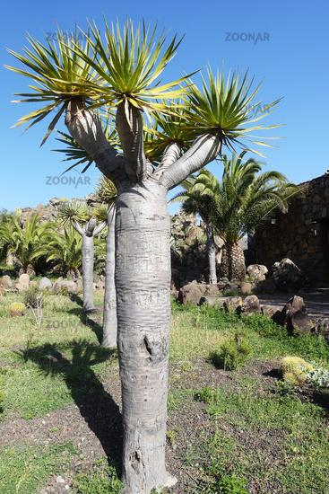 Vegetation on La Gomera, Spain