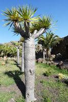 Vegetation at La Gomera, Spain