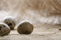 Fresh organic quail eggs on hemp fabric burlap. Space for text